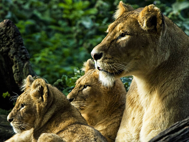 MON 6th May Chester Zoo Adult £11 Child £7